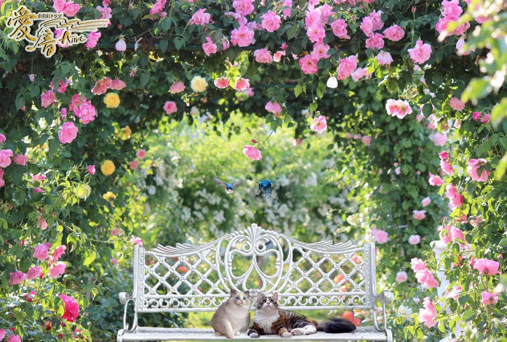 そろそろ秋薔薇の季節🌹イングリッシュローズの花言葉は『微笑み』📕✨