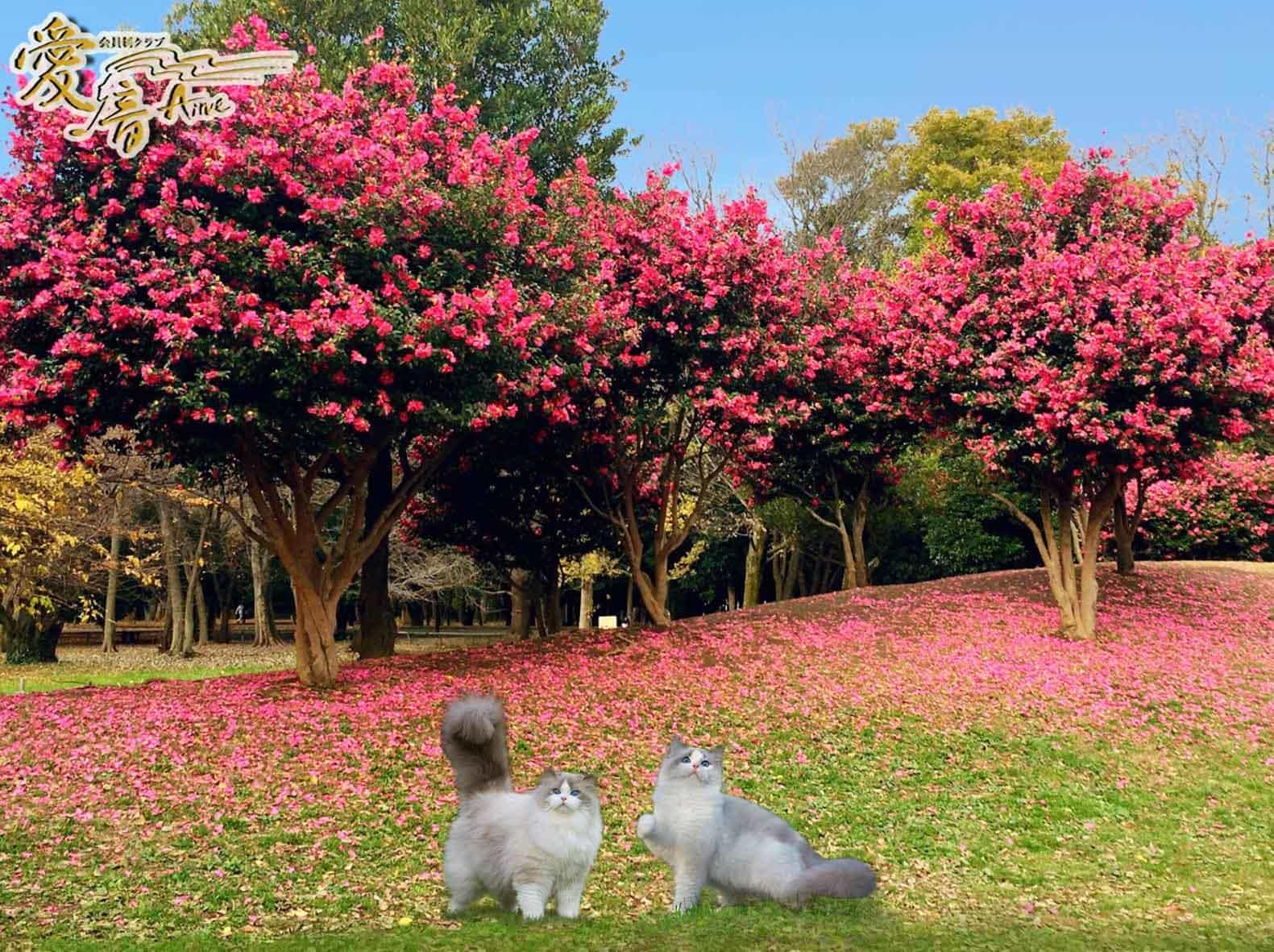 ほこっと暖ったか色💗山茶花の花言葉は、「あなたがもっとも美しい」「永遠の愛」✨