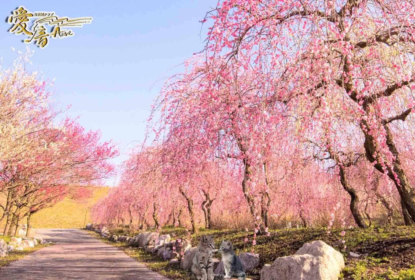 梅の花言葉は「高潔」「忠実」「忍耐」🥰
