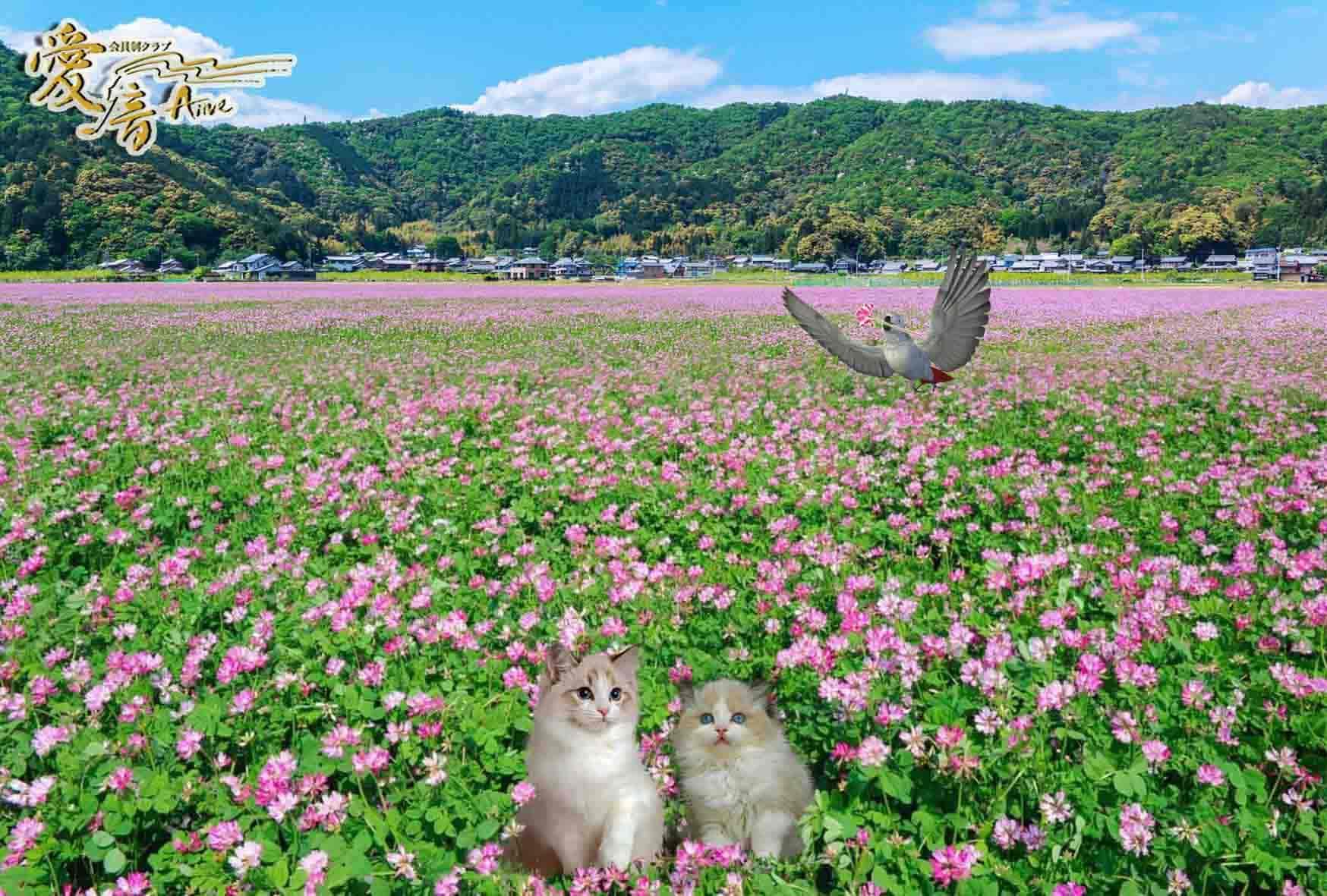 レンゲ草の花言葉は「心が和らぐ」😌🎀